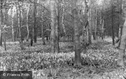 Bluebell Wood c.1960, Garstang