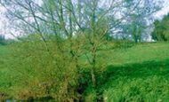 Gillingham photo