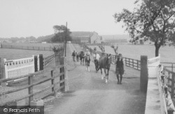 Racehorses At Ribblesdale Stud c.1960, Gisburn