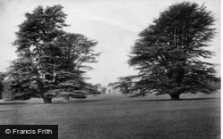 Goodwood, Park, Cedar Trees 1899