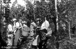 Measuring The Hops 1904, Goudhurst