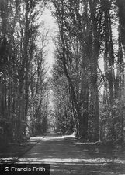 Grantown On Spey, Castle Grant, Lime Tree Walk c.1914, Grantown-on-Spey