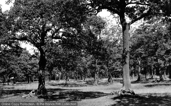 Photo of Grays, Hangmans Wood c1955, ref. G85025