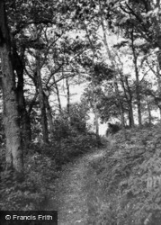 The Woods c.1955, Grayswood