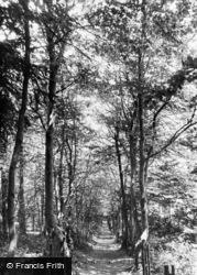 Beeches Walk c.1955, Green Street Green