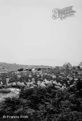 Cattle c.1935, Gruinard Bay