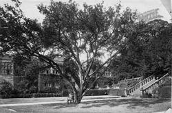 Terrace Steps c.1884, Haddon Hall
