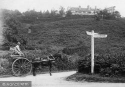 Hambledon, Horse And Cart, Mervil Hill 1904