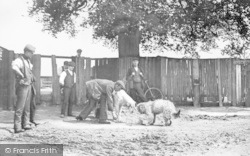 Ratting In Old Oak Road c.1900, Hammersmith