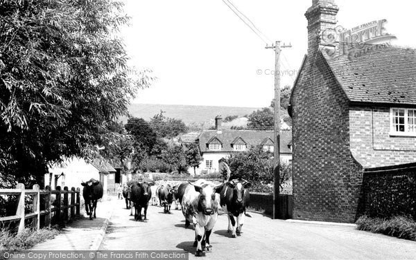 Photo of Hampstead Norreys, Church Street, Milking Time c.1950