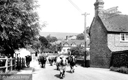 Hampstead Norreys, Church Street, Milking Time c1950