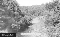 Hamsterley, The River, Hamsterley Forest c.1955