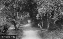 A Shady Walk On Harlow Moor 1921, Harrogate