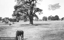 Hatfield Heath, The Heath c.1965