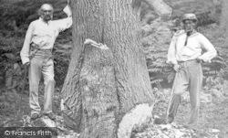 Hawarden, Park, W E Gladstone And Companion Tree Felling c.1880