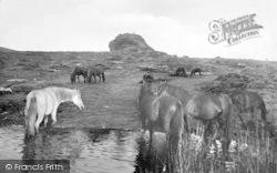 Haytor Vale, Ponies At Haytor Rocks 1927