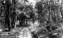 Haywards Heath, The Park c.1960