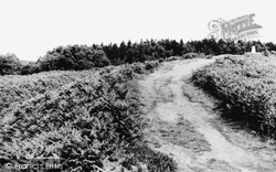 Hednesford, Highest Point On Cannock Chase 1960