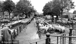 The Livestock Market c.1965, Hereford