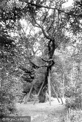 Highnam, Lassington Oak 1907