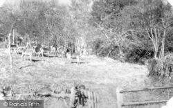 Holford, Deer At Holford Glen c.1955