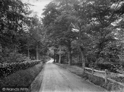 In Pasture Woods 1924, Holmbury St Mary