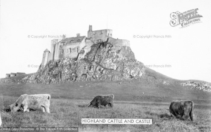 Photo of Holy Island, Highland Cattle And Castle c.1950