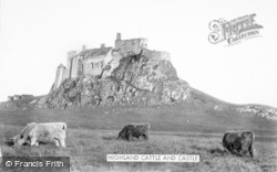 Holy Island, Highland Cattle And Castle c.1950