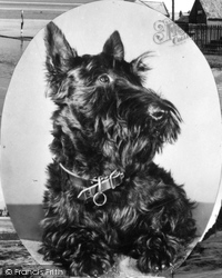 Holy Island, Scottish Terrier c.1955