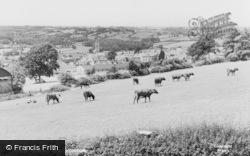 Honiton, General View c.1955