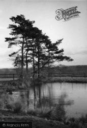 Horsham, A Forest Pool c.1930