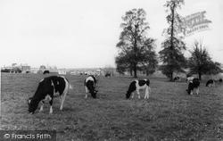 The Common c.1965, Hungerford