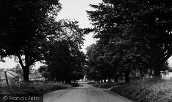 Hutton Rudby, The Avenue c.1955