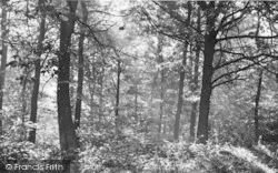 Ide Hill, In The Woods c.1955