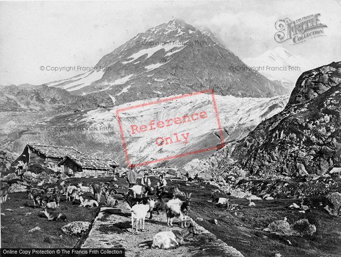 Photo of Innertkirchen, Susten Pass, Milking Goats c.1860