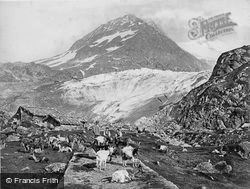 Susten Pass, Milking Goats c.1860, Innertkirchen