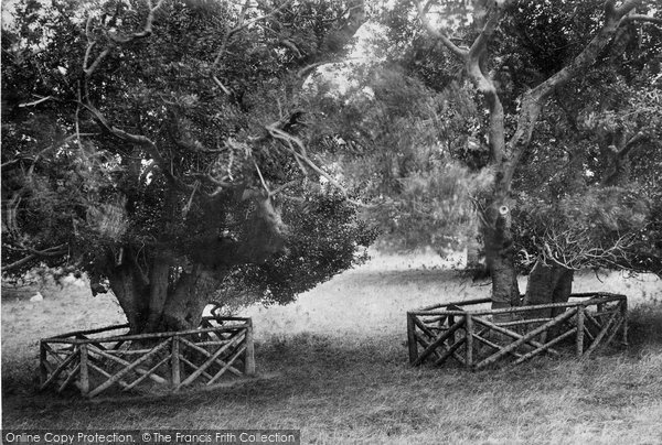 Photo of Innisfallen, Old Holy Trees 1897