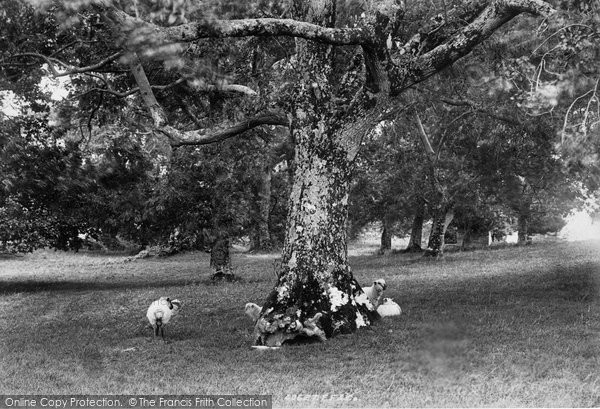 Photo of Innisfallen, The Friar's Grave 1897