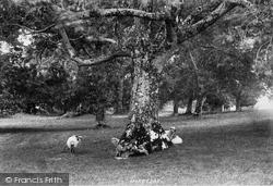 Innisfallen, The Friar's Grave 1897