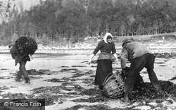 Inveraray, Collecting Seaweed c.1890