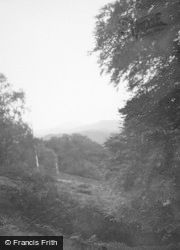 Inveraray, Forest  c.1950