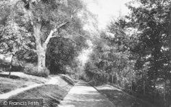 Lower Arboretum 1893, Ipswich