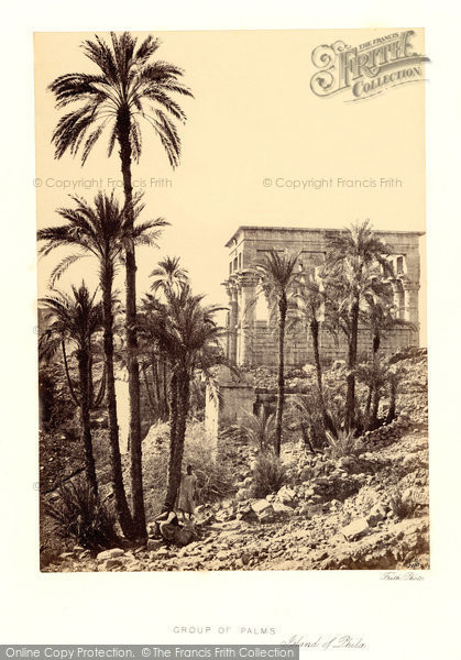 Photo of Island Of Philae, Group Of Palms 1860