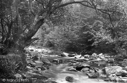 The Woods 1903, Ivybridge