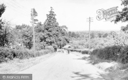 Baltonsborough Lane c.1955, Keinton Mandeville