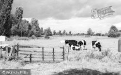 Kelvedon, Meadow Land c.1960