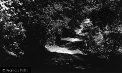 Walk In The Woods c.1960, Kildale