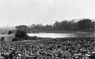 Killamarsh, the Ponds c1955