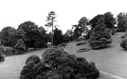 Killerton Park photo