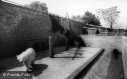 Kirby Misperton, The Bear Enclosure, Flamingo Park Zoo c.1960